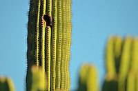 Captivating desert scenery from around the greater Phoenix and Sedona areas...