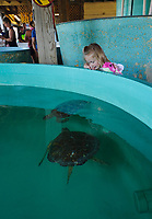 Kemp's ridley sea turtle(Lepidochelys kempii), Rescue and rehabilitation center, Sea Turtle, Inc., South Padre Island, Texas, USA