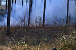 A controlled burn is used to remove old plant material from an area and to kill bushed and young hardwood trees in a pine stand.