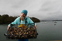 BNPS.co.uk (01202) 558833. <br /> Pic: ZacharyCulpin/BNPS<br /> <br /> Oyster gatherer Christopher Ranger pictured with a catch on The Fal estuary<br /> <br /> The Lone Ranger - A concerned oyster fisherman is crowdfunding to set up his very own 'micro-hatchery' in a bid to restore the UK's dwindling stocks of the shellfish.<br /> <br /> Chris Ranger, 44, currently runs Britain's last surviving oyster fishery on the River Fal in Mylor Churchtown, Cornwall.<br /> <br /> The site has been a hotbed for oyster activity for thousands of years but they are now on the brink of vanishing after years of overfishing.
