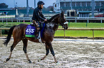 November 1, 2018: Divisidero, trained by Kelly Rubley, exercises in preparation for the Breeders' Cup Mile at Churchill Downs on November 1, 2018 in Louisville, Kentucky. Carolyn Simancik/Eclipse Sportswire/CSM