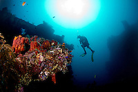 Liberty wreck in Tulamben - Bali with diver
