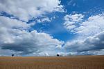 Europa, DEU, Deutschland, Hessen, Rhoen, Hessische Rhoen, Dietershausen (Kuenzell), Sommer, Agrarlandschaft, Getreidefeld, Himmel, Wolken, Cumuluswolken, Kategorien und Themen, Landwirtschaft, Landwirtschaftlich, Agrar, Agrarwirtschaft, Wetter, Himmel, Wolken, Wolkenkunde, Wetterbeobachtung, Wetterelemente, Wetterlage, Wetterkunde, Witterung, Witterungsbedingungen, Wettererscheinungen, Meteorologie, Bauernregeln, Wettervorhersage, Wolkenfotografie, Wetterphaenomene, Wolkenklassifikation, Wolkenbilder, Wolkenfoto<br /> <br /> [Fuer die Nutzung gelten die jeweils gueltigen Allgemeinen Liefer-und Geschaeftsbedingungen. Nutzung nur gegen Verwendungsmeldung und Nachweis. Download der AGB unter http://www.image-box.com oder werden auf Anfrage zugesendet. Freigabe ist vorher erforderlich. Jede Nutzung des Fotos ist honorarpflichtig gemaess derzeit gueltiger MFM Liste - Kontakt, Uwe Schmid-Fotografie, Duisburg, Tel. (+49).2065.677997, ..archiv@image-box.com, www.image-box.com]