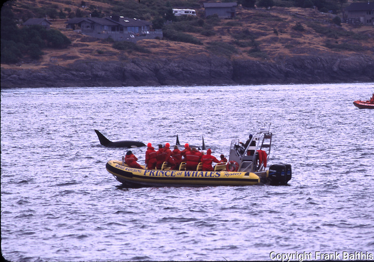 Whale watching tour and orcas off Lime Kiln Point