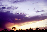 BOTSWANA, Africa, Chobe National Park and Game Reserve, a tree and storm clouds at Sunrise