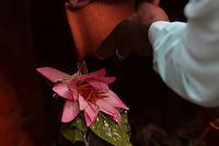 30.11.2008 Varanasi(Uttar Pradesh)<br /> <br /> Man putting water on offering of lotus flower to shiva lingam in a small temple near Ganga river.<br /> <br /> Homme mettant de l'eau sur une  offrande de fleur de lotus au shiva lingam dans un petit temple pres du Gange.