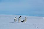 Fast Ice, Weddell Sea, Antarctica