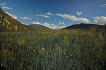 Spring flowers and grass in Alpine meadow, Imst district, Austria.