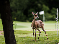 Golf Photos at The Refuge 2 - North Hennepin Chamber
