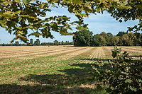 Stubble field in autumn - Lincolnshire; September