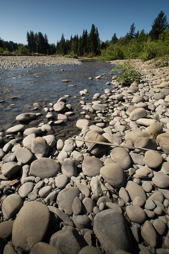 Queets River, Olympic National Park, Washington, US
