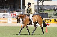 Child's Hunter Pony 13-14HH