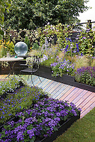 Fantastic color themed purple, lavender, blue garden with wooden rainbow walkway path, Heliotropium Scentropia Dark Blue heliotrope fragrant flower, garden glove, annuals, perennials, lobelia, clematis vine on black fence