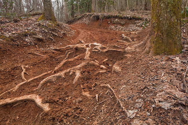 Buffalo Mountain ATV Trail #29, excessive erosion and trail damage due to over-use