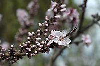 Wednesday March 18, 2020 at the Botanical Garden of the Ozarks in Fayetteville. (NWA Democrat-Gazette/J.T. Wampler)