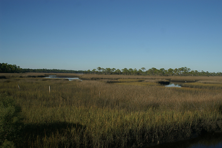 Tidal salt marsh on the Gulf coast.  The dominate vegetation is needle rush and cordgrass.