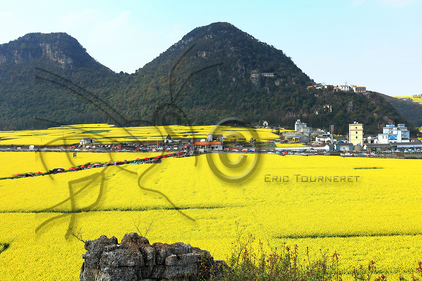 Luoping, Yunnan. Le village de Jinji Lin est le site le plus connu pour une balade au milieu des fleurs de colza. En haut de la colline au dessus du village, le temple bouddhiste offre un panorama superbe sur collines du coq d'or.///Luoping, Yunnan. The village of Jinji Lin is the site the most well-known for a stroll through the rape flowers. On the top of the hill above the village, the Buddhist temple offers a superb panoramic view over the Hills of the Golden Rooster.