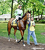 Hop The Six before The Beautiful Day Stakes at Delaware Park on 7/3/14