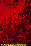 Mimosa leaves cast shadows on red umbrella. ©2014. Jim Bryant Photography. All Rights Reserved.
