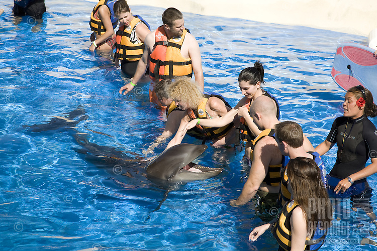 Tourists participating in the Dolphin Swim program at Hawaii Sea Life Park on the east side of Oahu