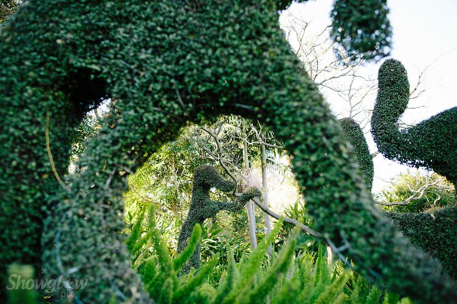 Image Ref: M266<br /> Location: Royal Botanical Gardens, Melbourne<br /> Date: 03.06.17