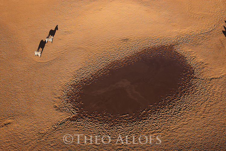 Namibia, Namib Desert, Namibrand Nature Reserve, aerial view of zebras  (Equus burchelli) near natural water hole