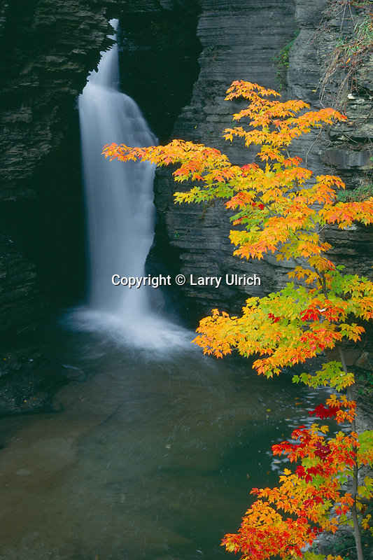 Red maple and Lower Falls<br />