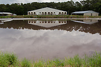Hog waste is pumped into a lagoon at a farm run by Thomas King, his son Gage and wife Sharon, where they raise hogs for Smithfield Foods, Inc near Wallace, NC Tuesday, May 15, 2018. (Justin Cook for The Guardian)