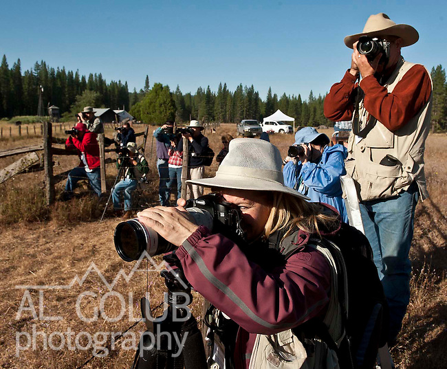 Ackerson Meadow off Evergreen Road near Yosemite National Park, August 14, 2010..Erickson Cattle Co. Cowboy Workshop 2010.  .Foreground Julie Kitzenberger, Campbell and Charles Phillips, Mariposa are front row making images during early morning session in Ackerson meadow.  Erickson Cattle Company Photography Workshop.Photo by Al Golub/Golub Photography