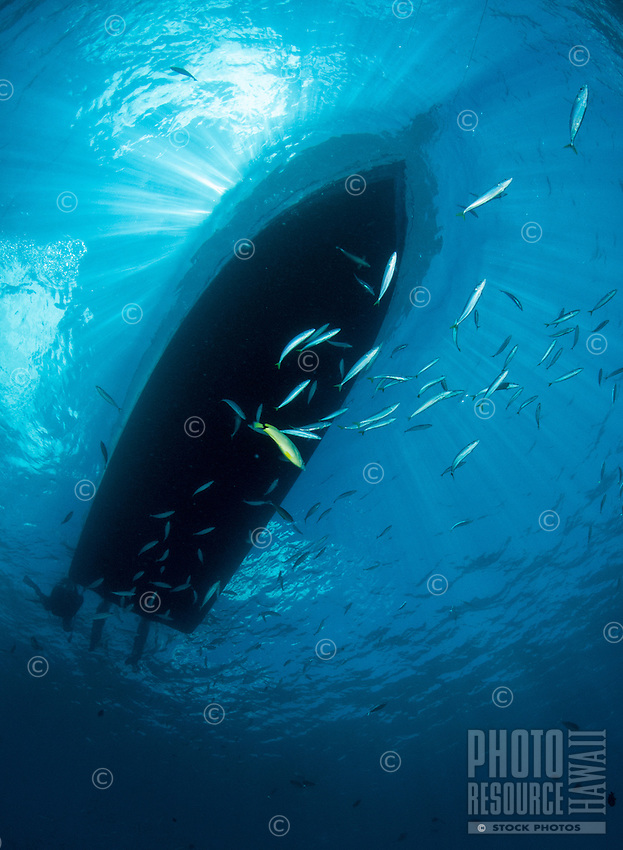 An underwater view of the silhouette of a boat off of O'ahu, with opelu in the foreground and rays of light above.