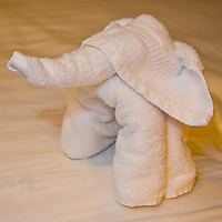 The towel elephant made by ship stewards, Agus & Eisge, on the ms Eurodam on Feb. 10, 2012