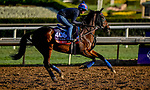 October 30, 2019: Breeders' Cup Turf entrant Mrs. Sippy, trained by H. Graham Motion, exercises in preparation for the Breeders' Cup World Championships at Santa Anita Park in Arcadia, California on October 30, 2019. Scott Serio/Eclipse Sportswire/Breeders' Cup/CSM