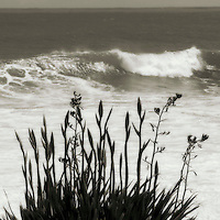 Flax & Wave, Manu Bay 2009