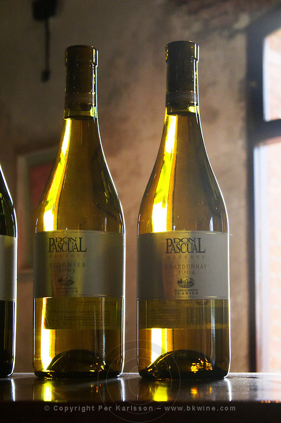Back-lit bottles of Don Pascual Reserve Viognier 2003 and Chardonnay 2004. Bodega Juanico Familia Deicas Winery, Juanico, Canelones, Uruguay, South America