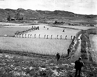 North Korean prisoners, taken by the Marines in a foothills fight, march single file across a rice paddy.  1950  (Marine Corps)<br /> Exact Date Shot Unknown<br /> NARA FILE #:  127-N-A3242<br /> WAR &amp; CONFLICT BOOK #:  1489
