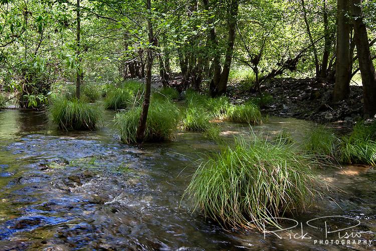 Alameda Creek flows through Sunol Regional Wilderness near Sunol, California. Sunol Regional Park is part of the East Bay Regional Park District.