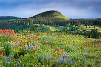 Every summer an explosion of wildflowers decorates the mountain meadows of the Colorado Rockies