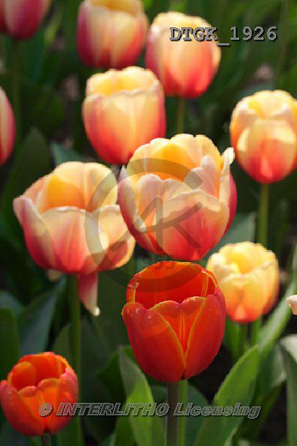 Gisela, FLOWERS, BLUMEN, FLORES, photos+++++,DTGK1926,#f#