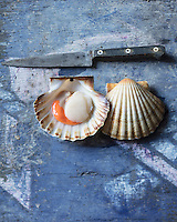 Coquille Saint-Jacques  /  Sea scallop - Stylisme : Valérie LHOMME