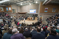 Stirling Bull Sales 2018<br /> Packed auction ring at the Stirling Bull Sales<br /> &copy;Tim Scrivener Photographer 07850 303986<br /> ....Covering Agriculture In The UK....