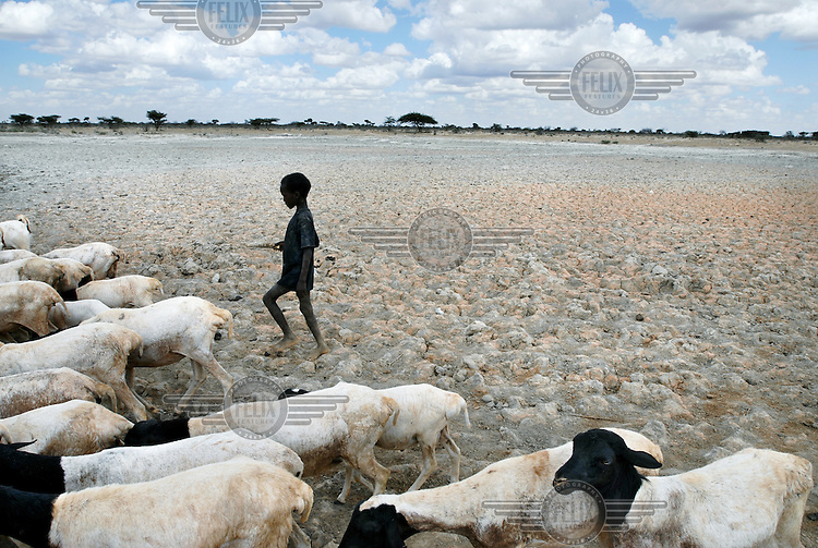 A boy herds his goats towards a well.  Much livestock in the region has perished in the severe drought which has extended across East Africa after the rainy season expected in October 2005 failed to arrive.  Most rural dwellers in the southernmost area of the country rely on two rainy seasons and two dry seasons per year.