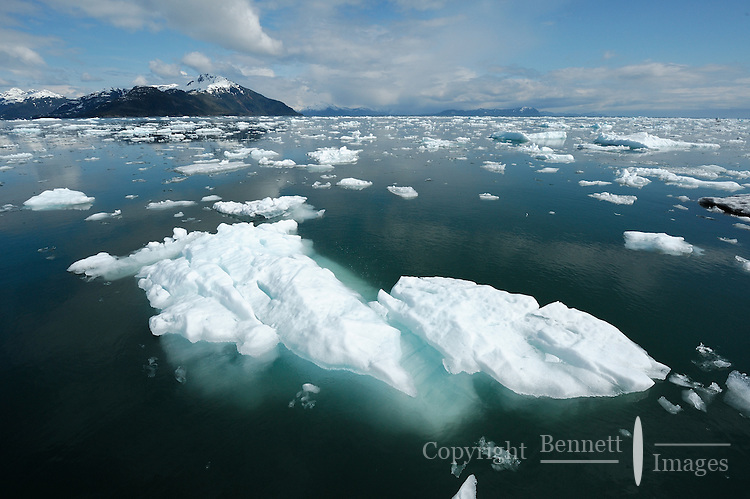 Bergy bits and brash ice float in Glacier Passage, in Prince William Sound, Southcentral Alaska on a sunny spring day in early May.