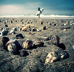 Low tide exposes shells on the sand at Venice Beach