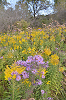 Landscape, fall wildflowers, trees at  Perch Creek Nature Habitat and at the Blackwell landfill site.