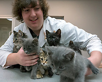 """LCCVI Grade 11 co-op student Kyle Herbert has struggles to pose a litter of kittens at the Sarnia and District Humane Society. Executive director Donna Pyette says the shelter is just starting the kitten season and already houses over 100 kittens and cats at the shelter and through the foster care system. """"The kitty season has just started,"""" she said. Kyle spends half his co-op at the shelter and the remaining time at the Canatara Park Children's Animal Farm tending everything from kittens to donkey's and horses."""
