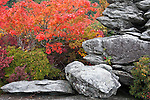 Ancient rock and autumn color, Blue Ridge Parkway, North Carolina
