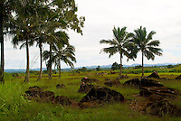 Historic Kukaniloko State Monument (Royal Birthing Stones) in Wahiawa, Oahu.