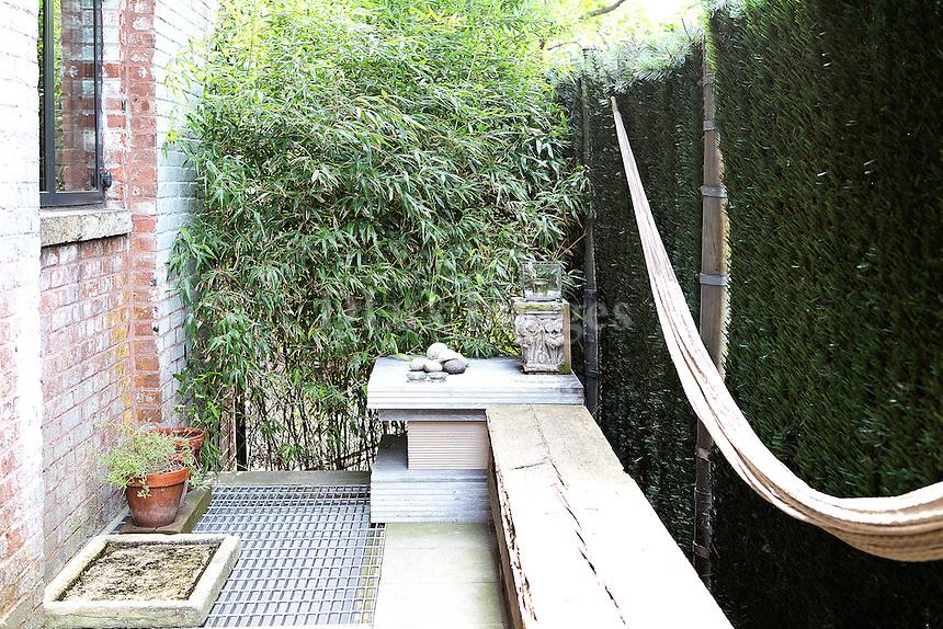 plants in the backyard