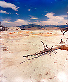 USA, Wyoming, dry tree stumps at the Crystal Terraces, Yellowstone National Park