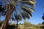 G-212 Tel Aviv University Botanic Gardens